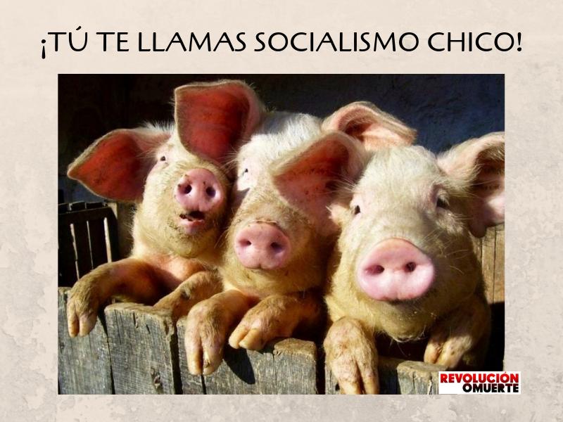 ¡TÚ TE LLAMAS SOCIALISMO CHICO! 2